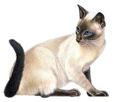 A Missing Siamese Cat and Your Next Member Survey